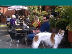 Tila's is a dog-friendly restaurant in Houston.