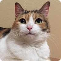 Adopt A Pet :: Brooklyn 'Senior' Offered by Owner - HILLSBORO, OR
