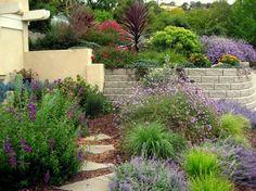 aménagement jardin méditerranéen avec de la lavande, des fleurs assorties en lilas et jaune et des graminées d'ornement