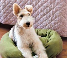 Que tal inovar a casinha do cachorro com pouco dinheiro? Pegue aquele moletom jogado no canto e faça agora uma cama para o bichinho ficar bem quente no inverno.