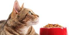 Gatti, gli alimenti da evitare o limitare. Chi ama i gatti e li ha scelti come propri amici e animali domestici dovrebbe prendersi cura al meglio della loro alimentazione. Non tutti i cibi che portiamo normalmente sulle nostre tavole sono adatti ai mici. Proprio come per i cani, anche nel caso dei gatti esistono alcuni cibi che sarebbe bene evitare o limitare per non andare incontro a conseguenze spiacevole per la salute dei nostri animali domestici. Ecco alcuni indicazioni utili, sulla base…