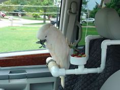 PARROT,CAR,STAND,GYM,BIRD,TABLE,CHAIR,PERCH,NEW 1334B