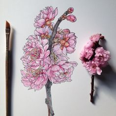 Noel Badges Pugh dabbles in scientific illustration as well as artwork with a more psychedelic perspective. Inspired by nature and dreams, all's created with an utmost appreciation for the de… Watercolor Flowers, Watercolor Paintings, Flower Line Drawings, Badges, Ink Pen Drawings, Insect Art, Plant Drawing, Botanical Prints, Art Inspo