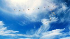 3479x1957 free desktop wallpaper downloads bird