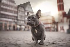 did you say cookies? by Hannah Meinhardt on 500px