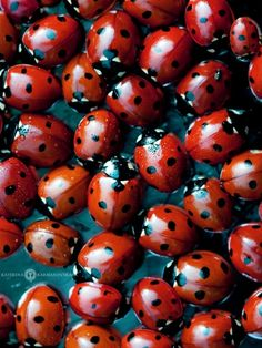 Lady Bug, Lady Bug, fly away home. Anyone remember repeating that little saying while holding a lady bug. Macro Fotografie, A Bug's Life, Tier Fotos, Red Aesthetic, Shades Of Red, My Favorite Color, Favorite Things, Beautiful Creatures, Lady In Red