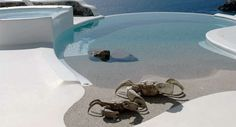 Rent luxury holiday villa in Mykonos - Greece, with swimming pool and amazing views