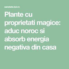 Plante cu proprietati magice: aduc noroc si absorb energia negativa din casa Feng Shui, Author, Plant