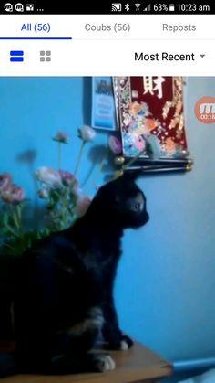Kitten Destroys Flower Pot