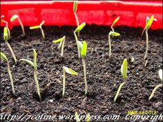 Seeds, Gardening, Plant, Lawn And Garden, Horticulture