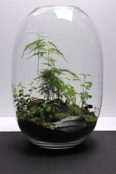 Guide sur le terrarium par Le Jardinier paresseux