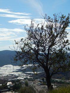 Vista en altura del Campo de Dalias. Almeria