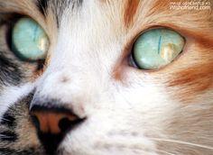 Photo Effect - Cat Eye - Generated at Wishafriend.com