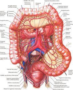Female Human Anatomy Diagram 52 New Stocks Of Female Human Body Diagram Ba Center From Human Body Anatomy, Human Anatomy And Physiology, Muscle Anatomy, Intestines Anatomy, Arte Com Grey's Anatomy, Human Body Diagram, Medical Coding, Medical Science, Medical Anatomy