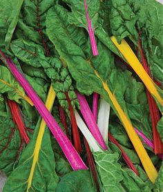 Swiss Chard, Neon Lights Mix.  Grow it as a border around a flower bed.  It is pretty and ready to trim and cook for dinner