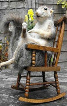 Squirrels rock!!!                                                                                                                                                      More