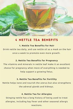 There are so many nettle tea benefits, and benefits to stinging nettle, that it's a wonder more people aren't drinking this tea. Nettle leaf benefits include regulating blood pressure levels and can even aiding in weight loss. Nettle leaf tea isn't techni Nettle Tea Benefits, Calendula Benefits, Tomato Nutrition, Stomach Ulcers, Coconut Health Benefits, Types Of Tea, Matcha Green Tea, Vitamins And Minerals, Herbal Remedies