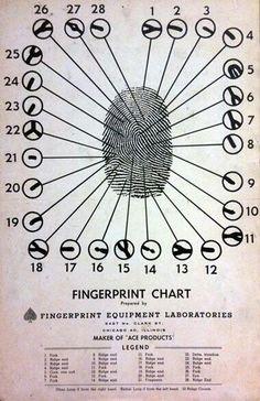 Fingerprint chart.  #fingerprint #chart #forensic #science