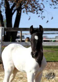Odysseus, one week old foal