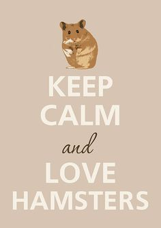 Keep Calm and Love hamsters by Agadart on Etsy. We have an obsession of hamsters! Teddy Hamster, Hamster Life, Syrian Hamster, Hamster Stuff, Hamster Cages, Animals And Pets, Baby Animals, Funny Animals, Poster