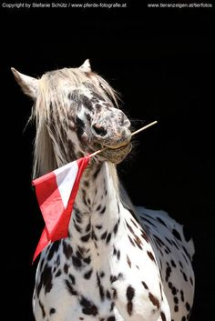 I Am From Austria ;-)))) -- #horse black and white österreich funny
