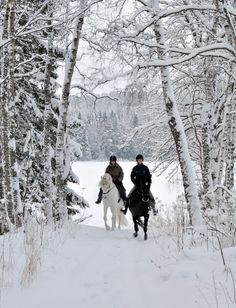 A winters ride / This pic looks just like my horses I had . Looks just like our wooded area where we would go riding. Winter Szenen, I Love Winter, Winter Magic, Winter Time, Winter Christmas, Winter Walk, I Love Snow, Snow Fun, Winter's Tale