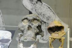#Travel #tour #Darwin Museum (194)