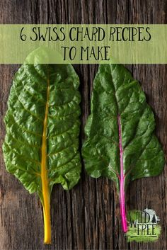 Wild+Free Family // 6 Swiss Chard Recipes. Swiss Chard is one of my favourite things to grow & eat. Here's 6 recipes to get you thinking about the old silver beet!