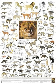 East African Mammals Poster | Carnivore Animal List