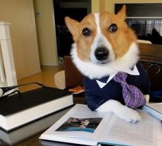 Scholarly Corgi pens second book on pet care.
