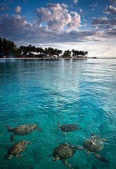 3 words : Gorgeous, Gorgeous, Gorgeous...at Derawan Island - East Kalimantan, Indonesia