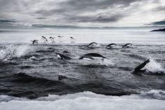 24 countries and the European Union have agreed to set aside a 600,000-square-miles of the waters of the Ross Sea off the coast of Antarctica as a marine protected area.