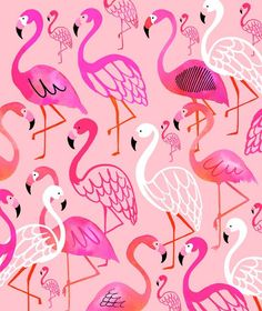 Summer Flamingos by Margaret Berg