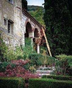 /\ /\ . ancient vineyard in Valpolicella