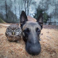 Documenting the Curious and Adorable Friendship between a Dog and an Owl! 🦉 Friendship can be found in even the strangest of places! Nature Animals, Animals And Pets, Funny Animals, Cute Animals, Wildlife Nature, Unlikely Friends, Amor Animal, Cute Photography, Nature Photography