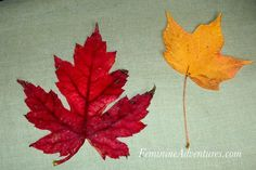 What a fantastic thing to do with the kids and all the autumn leaves! I love this post.