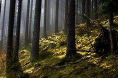 Sherwood Forest by Rob van der Griend, via 500px