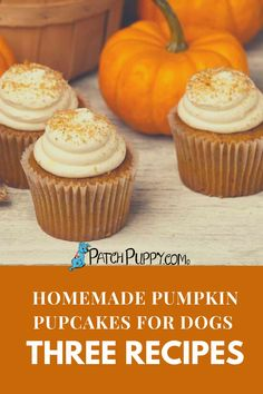 Baking dog treats with pumpkin is easy and great tasting with these 3 recipes featuring Pupcakes dogs. Naturally sweetened and wholesome. Pumpkin Dog Treats, Diy Dog Treats, Dog Treat Recipes, Dog Food Recipes, Dog Snacks, Homemade, Baking, Dogs, Easy