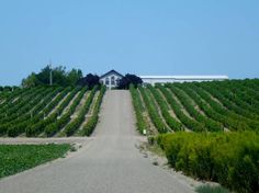 Sawtooth Winery Review - If you are looking for a well-rounded wine selection with high-quality products as well as a peaceful place to get away, Sawtooth is the place. If you are lucky, Hanna will be there to guide you through an afternoon of tasting some of the best wines in Idaho.