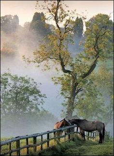 Horses in country morning mist. Pretty Horses, Horse Love, Beautiful Horses, Beautiful World, Beautiful Places, Country Scenes, Farm Life, Country Life, Country Living