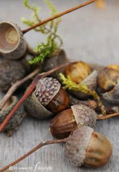 …love acorns…right up there with pinecones fro me! Autumn Day, Autumn Leaves, Oak Leaves, Hello Autumn, Photo Fruit, Acorn And Oak, Fall Harvest, Fall Season, Pine Cones