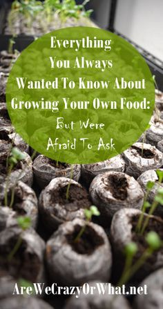 Everything  You Always  Wanted To Know About  Growing Your Own Food:  But Were  Afraid To Ask