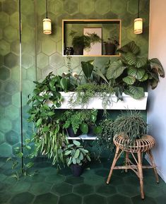 """Rooted on Instagram: """"🌿So many goals in a single photo. Thanks for sharing @theoldpiggery_ ! ______ Share your own plant portraits with us at @heyrooted +…"""" Free Plants, Cool Plants, Nature Plants, Bathroom Without Windows, Indoor Garden, Indoor Plants, Room With Plants, Bathroom Plants, Room Goals"""