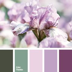 aubergine, colors of spring 2017, dark emerald, delicate pink, delicate purple color, emerald, lilac, lilac color, purple, shades of emerald, shades of green, shades of magenta.