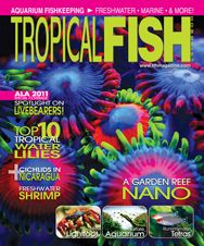 The livebearer-themed April 2011 issue also features articles on appropriately stocking a nano reef tank, freshwater shrimps, caring for groupers in the home aquarium, and much more!