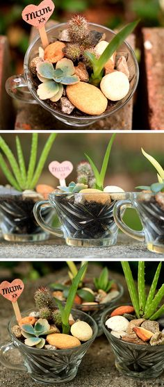 Mini Succulent Gardens for Mum | Click Pic for 20 DIY Mothers Day Craft Ideas for Kids to Make | Homemade Mothers Day Crafts for Toddlers to Make