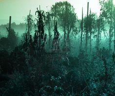 Green Ghost Garden In Dawn
