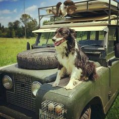 JBK Land Rover Series and Dog