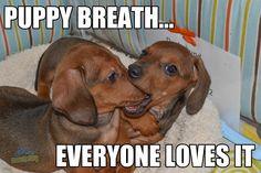 Yeah, I do...I do like puppy breath.