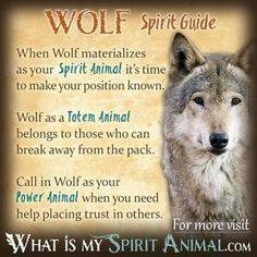 Wolf Spirit Guide #wolf #spiritanimal #quotes #animals #wolf